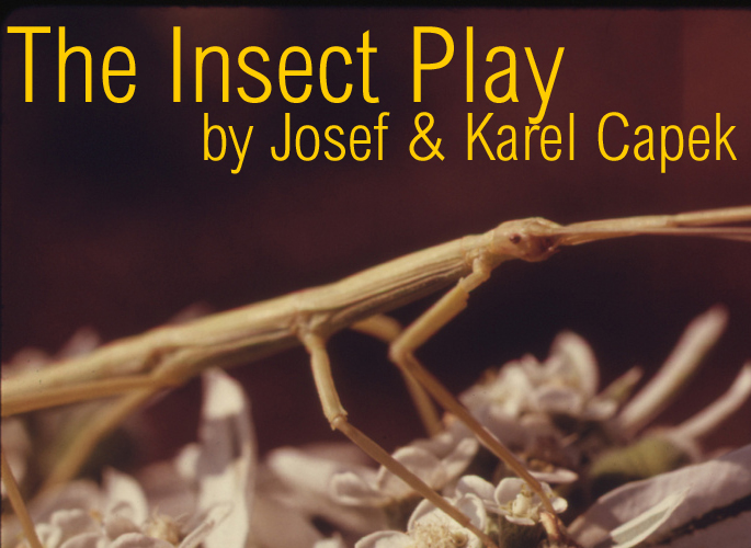 InsectPlay